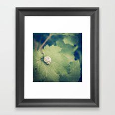 Shell Tan Framed Art Print