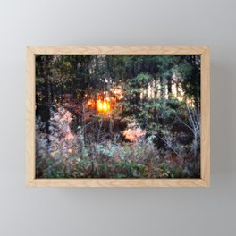 Sunset Forest : Where The Fairies Dwell Framed Mini Art Print
