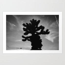 Cholla Cactus Garden XV Art Print