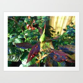 Tight in the Bud Art Print