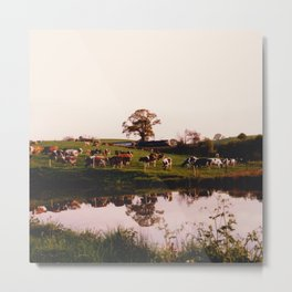 Cows in the Canal Metal Print