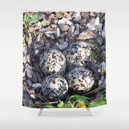 Killdeer eggs in nest Shower Curtain