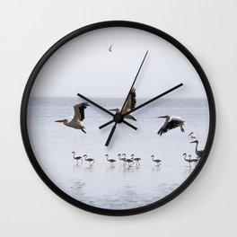 Pelican, Fly Wall Clock