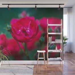 Macro Photography. Beautiful Rosa Polyantha. Wall Mural