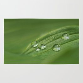 Water drops on green grass Rug