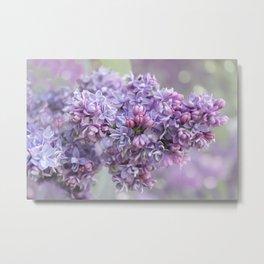 Lilac Loveliness  Metal Print