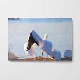 Pelican Wooing I Metal Print