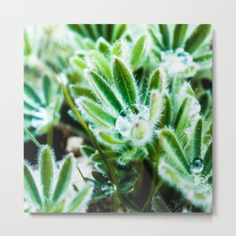 Lupine Leaves Photography Print Metal Print
