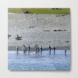 Paddling Penguins Metal Print