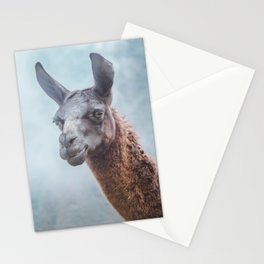 Curious, wise looking guanacao / llama on a blue misty morning in the Andes mountains, Peru Stationery Cards