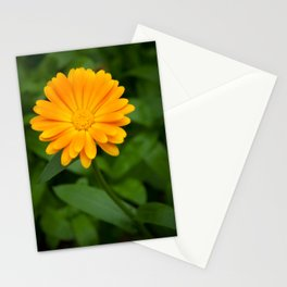 Yellow flower calendula officinalis and green leaves on background Stationery Cards