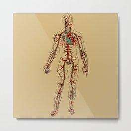 Circulatory System 2 Metal Print
