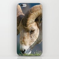 ram iPhone & iPod Skins featuring Ram by David Todd
