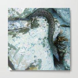 Watercolor Eel, Spotted Moray Eel 03, St John, USVI Metal Print