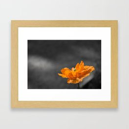 Spanish Poppy Framed Art Print