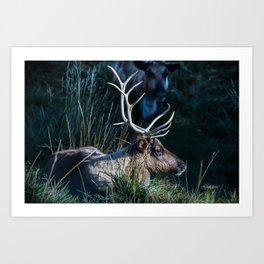 Bull Elk at Bear Country Art Print