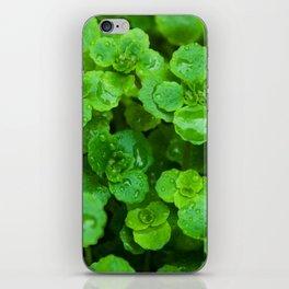 Winter rain iPhone Skin