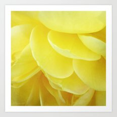 Petals in Yellow Art Print