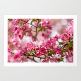 Bright Pink Crabapple Blossoms Art Print