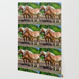 """""""Equine Duo"""" Wallpaper"""