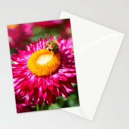 Helichrysum bracteatum with a busy bee Stationery Cards