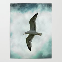 Seagull Before A Cloudy Sky Poster