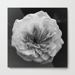 Alchymist Rose Black & White Nature / Floral Photograph Metal Print
