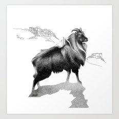 Tahr / Thar Art Print