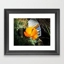 A Bright Orange Poppy Framed Art Print