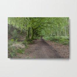 Blackborough woodland Footpath Metal Print