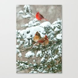 After the Snow Storm: Three Cardinals Canvas Print