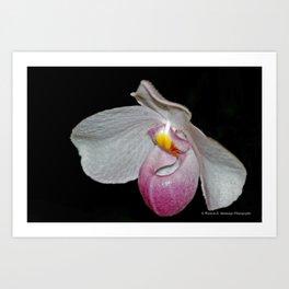 Paphiopedilum Orchid Art Print