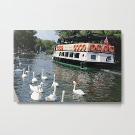 swans and a boat on water, man and nature on the same path in England Metal Print