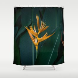 Orchids yellow Shower Curtain