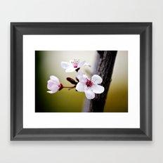 Signs of Spring 3 Framed Art Print