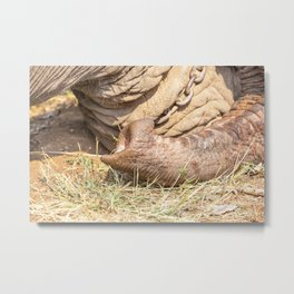 trunk of an elephant Metal Print