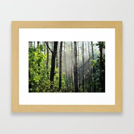 Forest Nature Framed Art Print