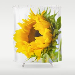 sunflower, girassol Shower Curtain
