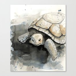 Gopher Tortoise Canvas Print