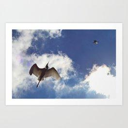 Egrets soaring against blue sky Art Print