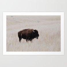 Oklahoma bison Art Print