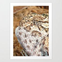 Chameleon - Macro Portrait Art Print