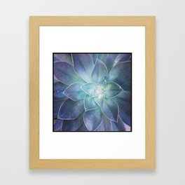 Dana Point Succulent 2 Framed Art Print
