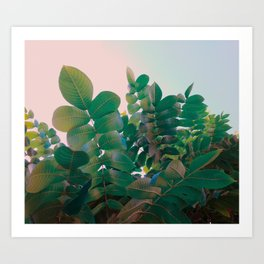 Emerald foliage Art Print