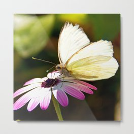 White Butterfly Metal Print