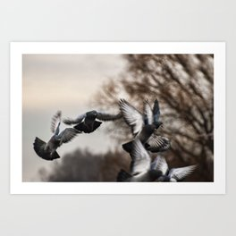 Flying Pigeons Art Print