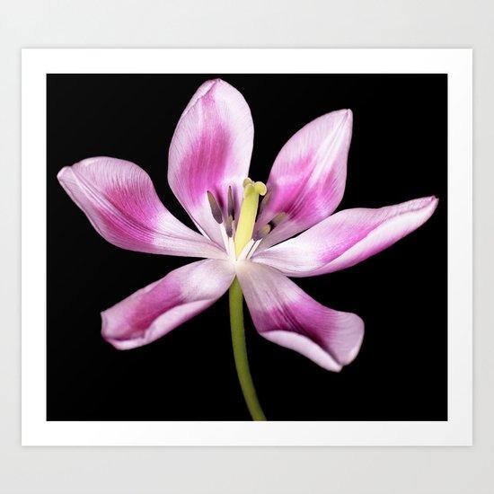 Open for spring Art Print