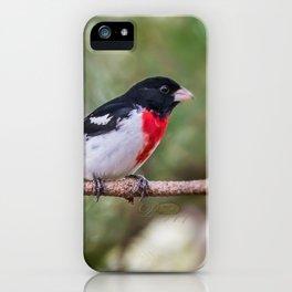 Rose-breasted Grosbeak iPhone Case