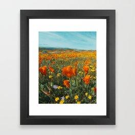 California Wildflower Poppy Superbloom Framed Art Print