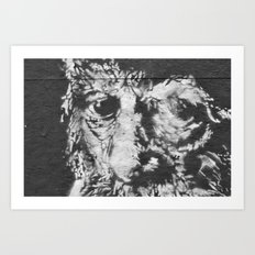 eyes of wisdom Art Print